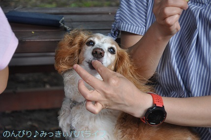 yakitomorokoshi09.jpg