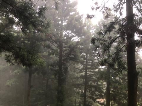 190814霧の森