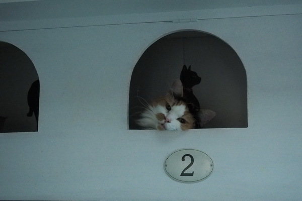 2号室のネコ
