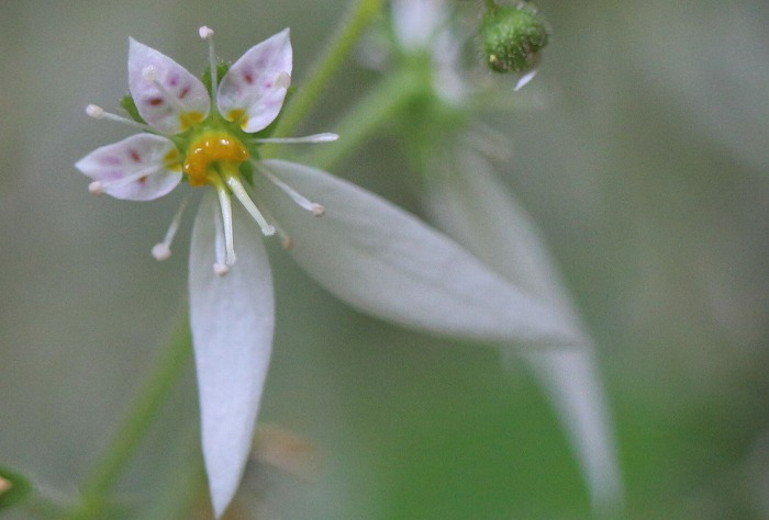 雪の下の花 1 6 5