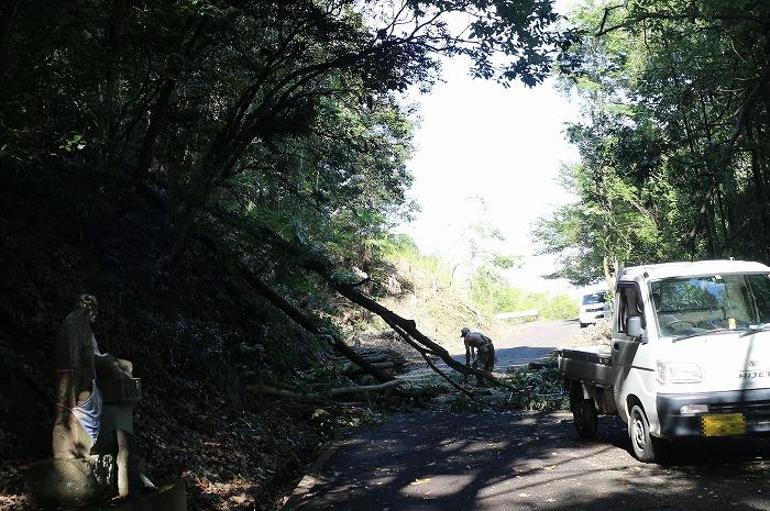 去年から木を伐ってる 爺神山 1 7 4