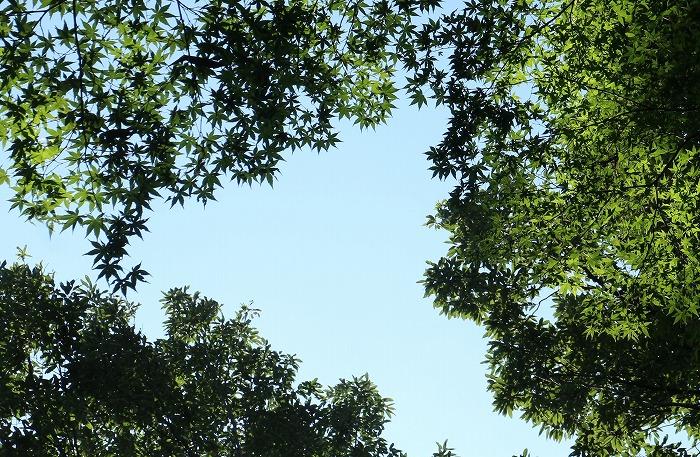 空と緑と黄緑のカエデ爺神山 1 7 4
