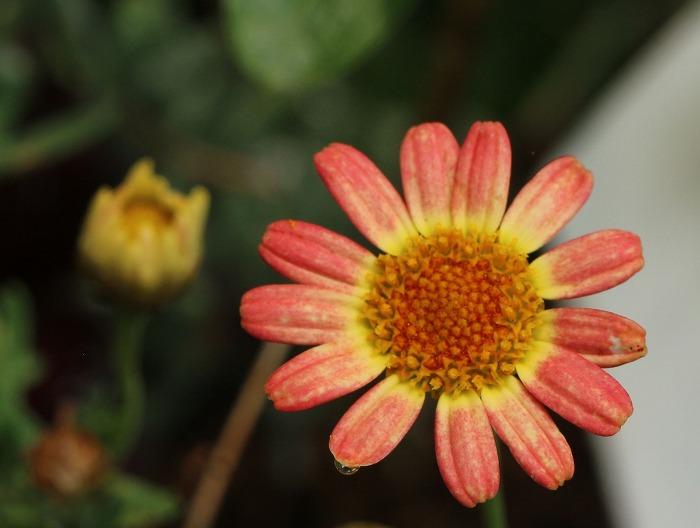 今 咲いてる花です 1 7 9