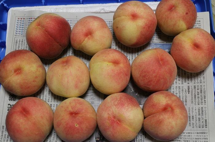 桃もいっぱい 1 7 17