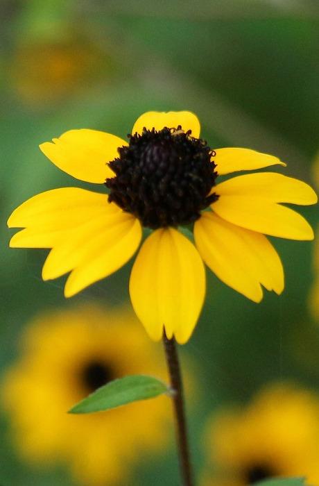 台風後頑張ってる黄色い小さな花 1 8 16