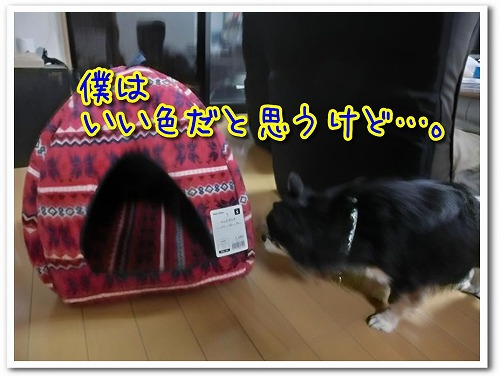 20191226BED (6)