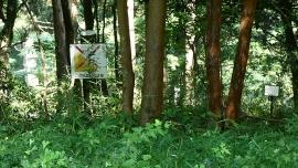 20190803やすらぎの森114