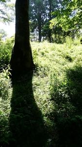 20190803やすらぎの森117