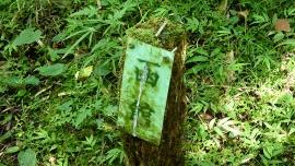 20190803やすらぎの森154