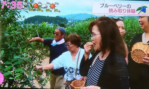 NHKTV放送