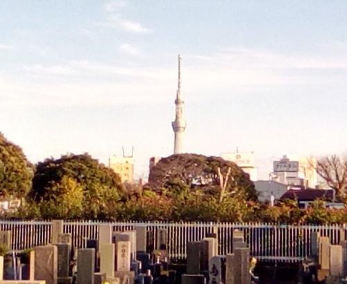 M寛永寺墓地