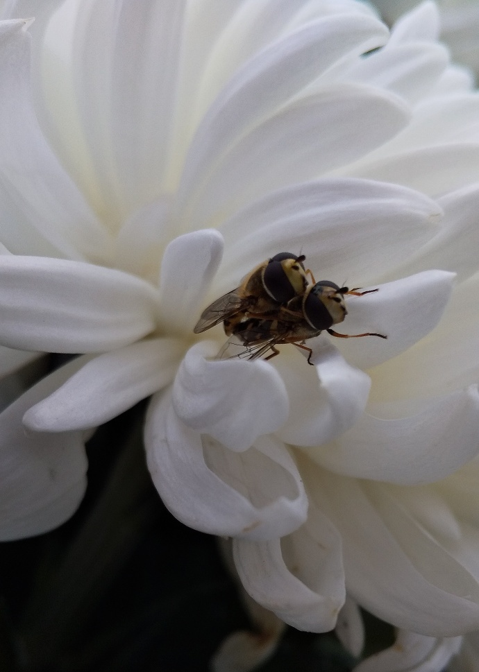 191101蜂