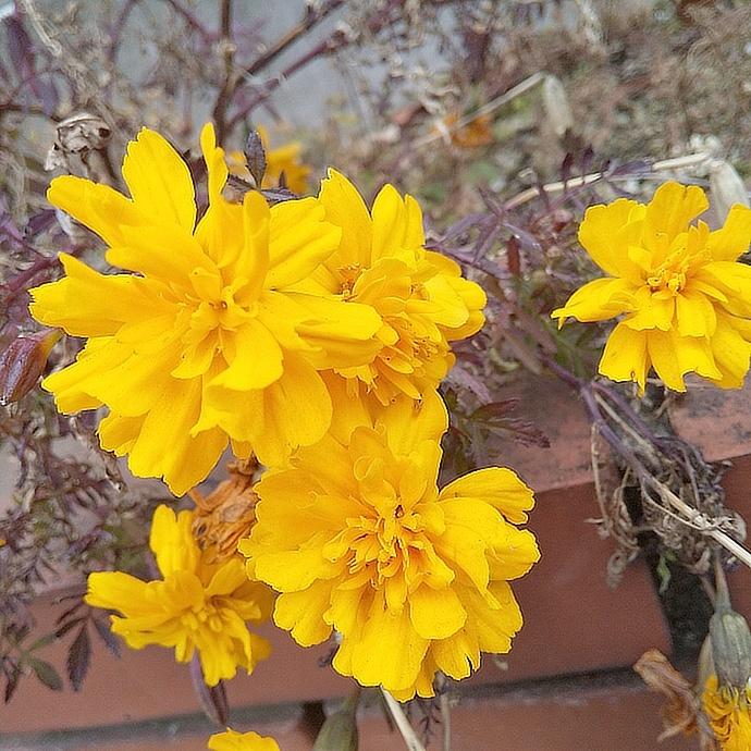200207黄色