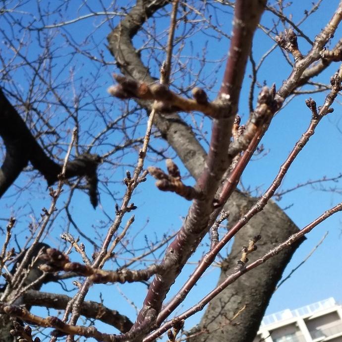 200212梅桜 (4)