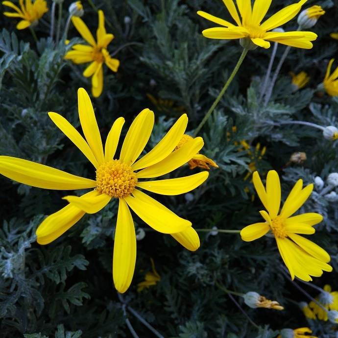 200305黄色
