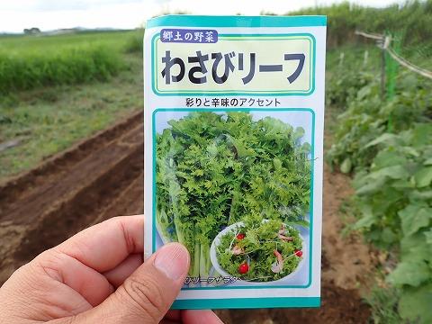 2019.09.03菜園16