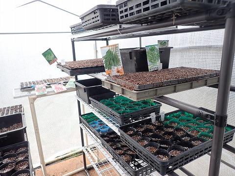 2020,2,26菜園11