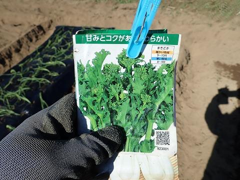 2019.11.05菜園14