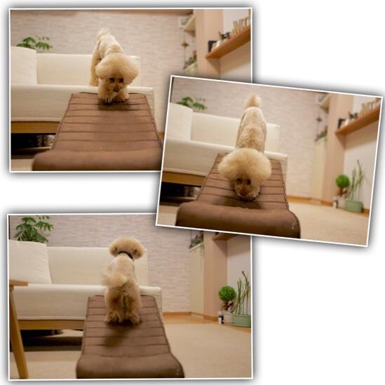 fc2blog_2020012622075960e.jpg