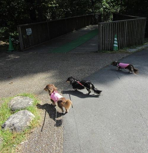 あづみの公園191001⑱