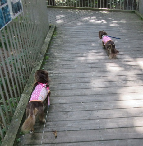 あづみの公園191001⑳②