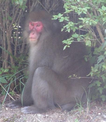 お猿さん191001②