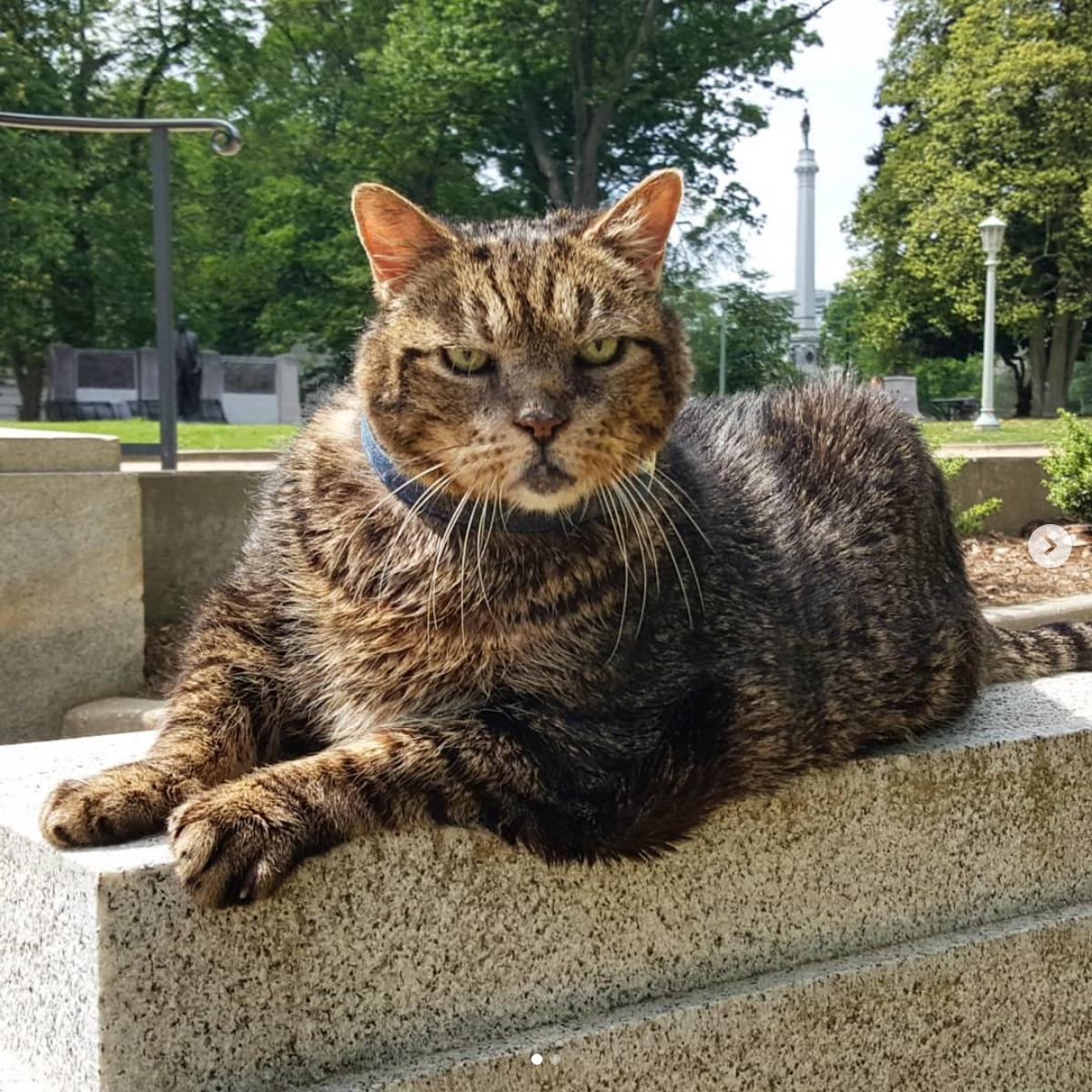 Screenshot_2019-11-13 Oak City Kitty( oakcitykitty) • Instagram写真と動画