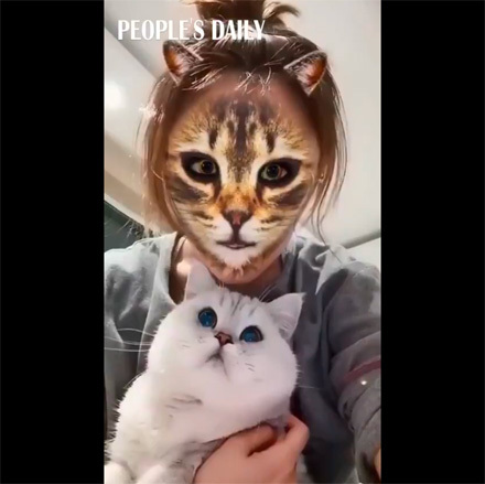 Whencatsmeetcat filters