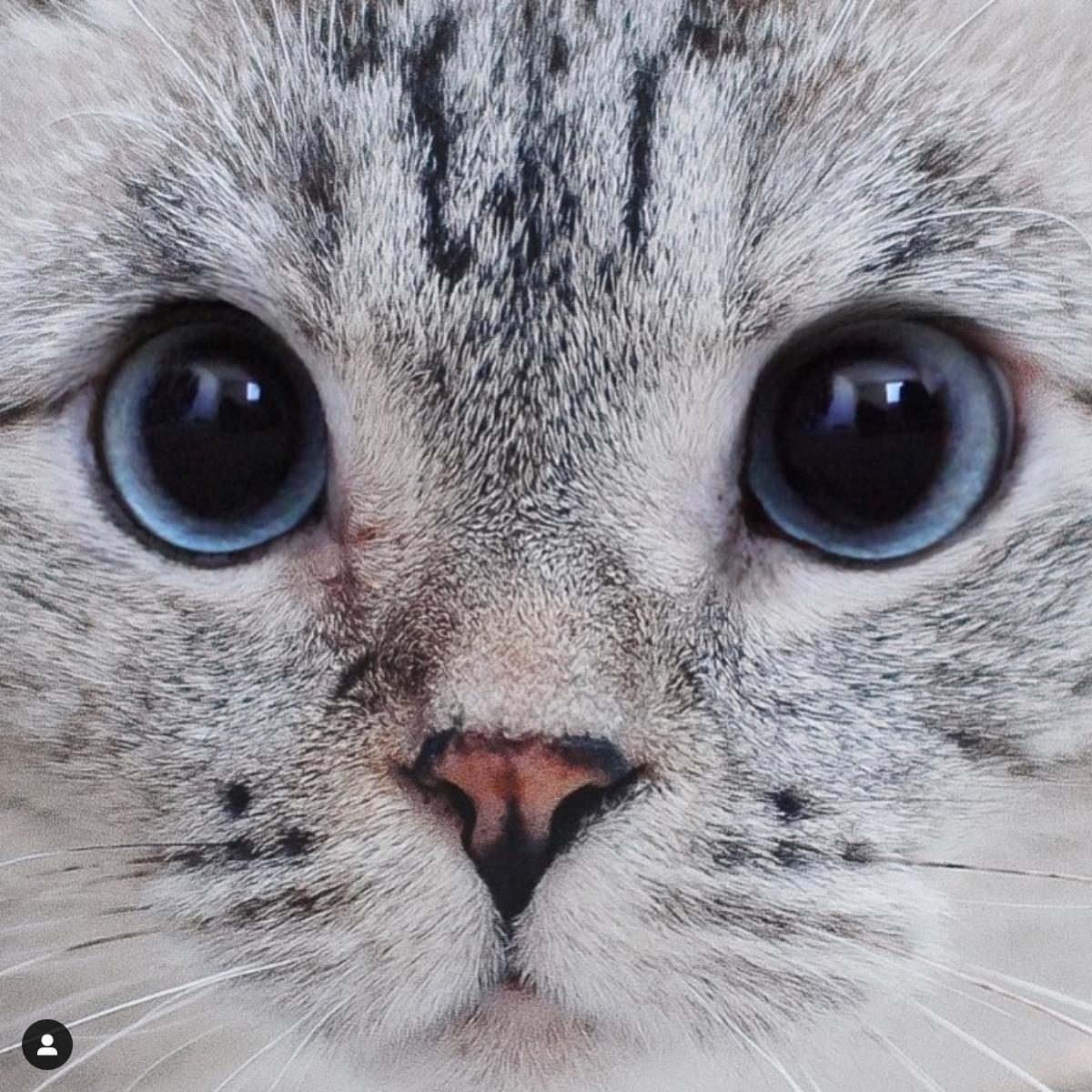 Screenshot_2019-12-08 Nala Cat ™( nala_cat) • Instagram写真と動画