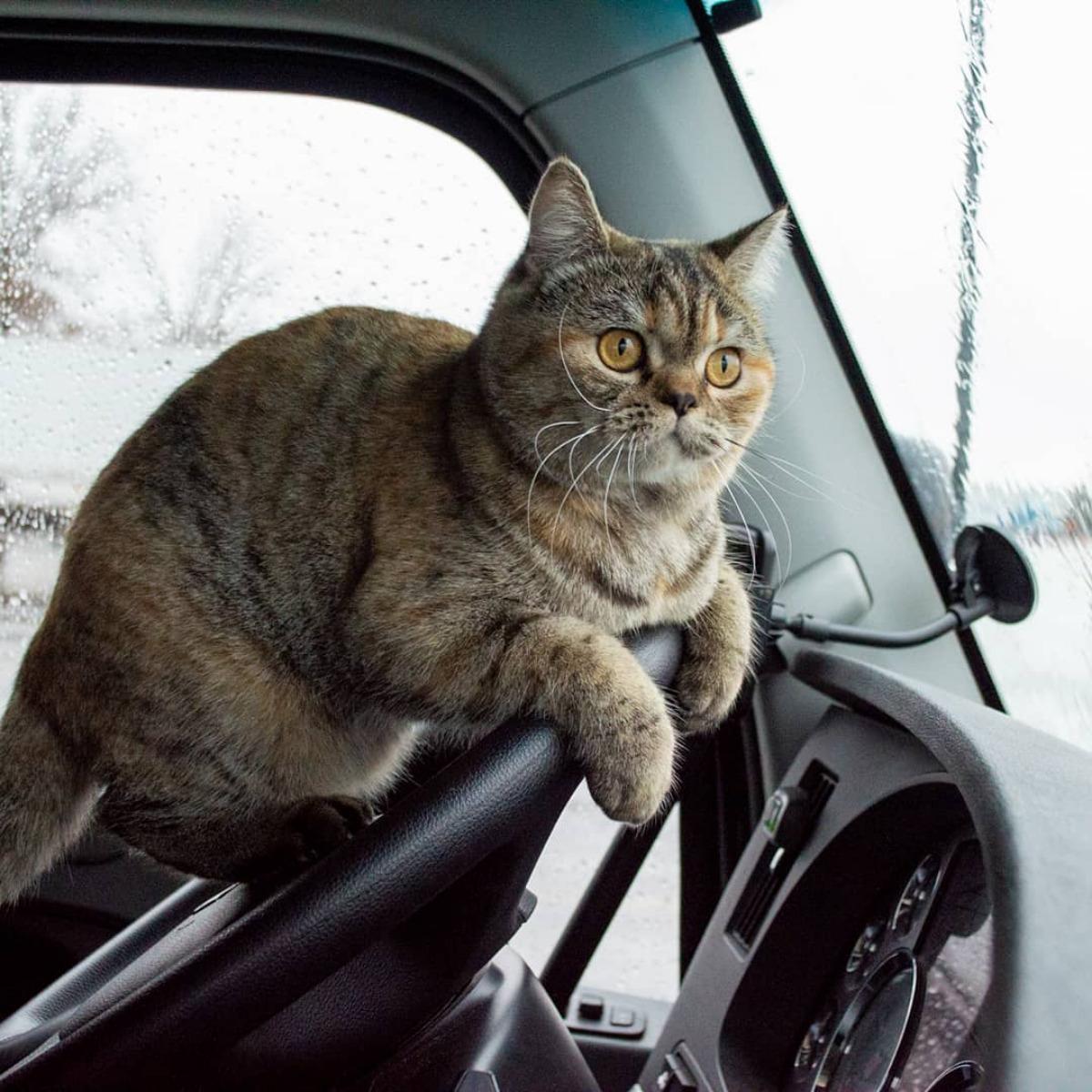 Screenshot_2020-01-10 Tora the Trucker Cat( toratravels) • Instagram写真と動画