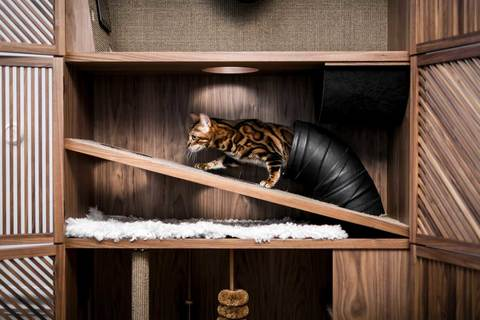 24Storage-The-Cat-Flat-2s