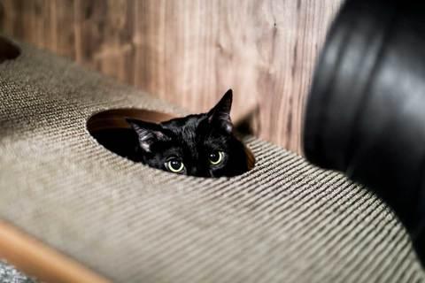 24Storage-The-Cat-Flat-7