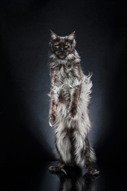 Alexis-Reynaud-STANDING-CATS-NODDY-01-5d1af5b5cb771