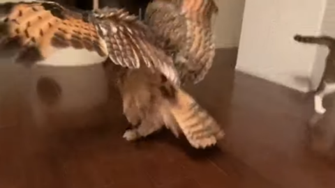 Catandowlplayingfetch4