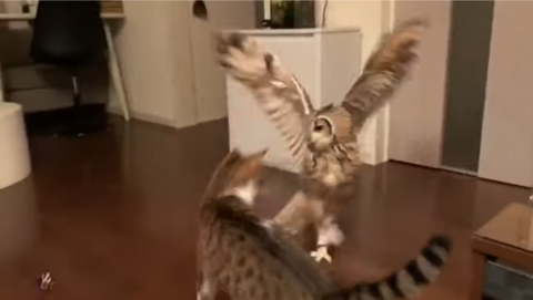 Catandowlplayingfetch8