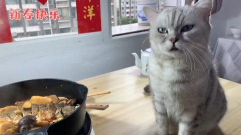 CookingCat_fish6