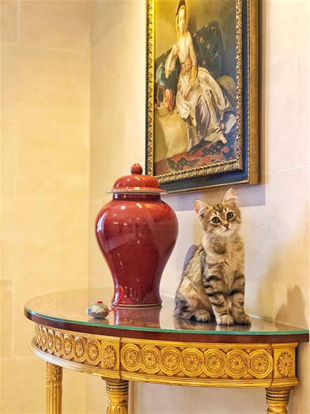 Lilibet_The_Lanesborough_Resident_Cat_7919