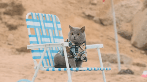 PM_World'sFirstCatLifeguard1