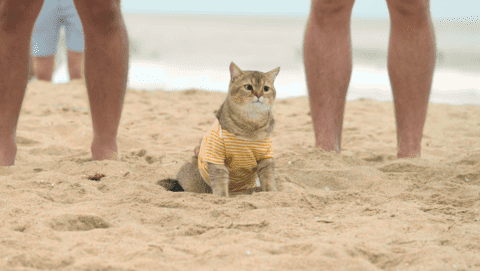 PM_World'sFirstCatLifeguard4