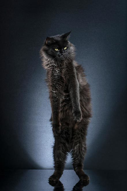 STANDING-CATS-a-photo-series-by-Alexis-Reynaud-5d1c694171e66
