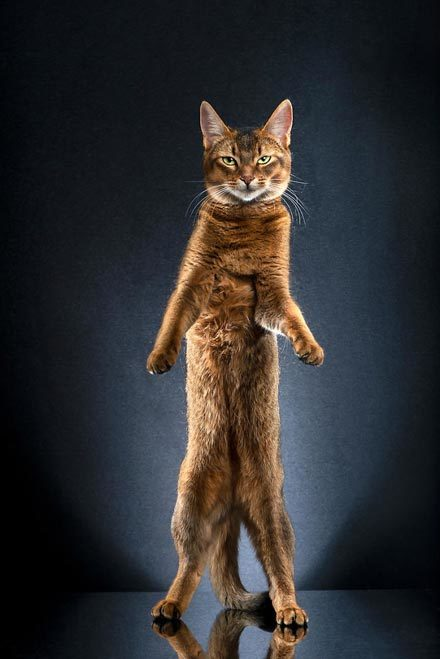 STANDING-CATS-a-photo-series-by-Alexis-Reynaud-5d1c69c42f663