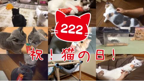 caochuru11_02222020