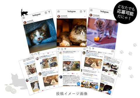 chicken-nakata_nekokotatsu_sub5
