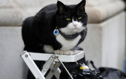 palmerston-returns-to-foreign-office-as-staff-told-to-stop-picking-him-up-and-feeding-him-too-many-treats-as-it-caused-him-stress-
