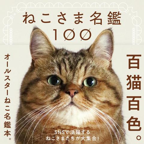 猫 ブログ 人気