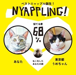 nyappling17