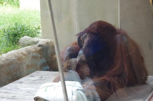 ミミさん 福岡市動物園