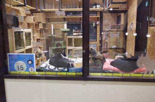 保護猫シェルター付きゲストハウス ねこ蔵 / Nekokura Hostel