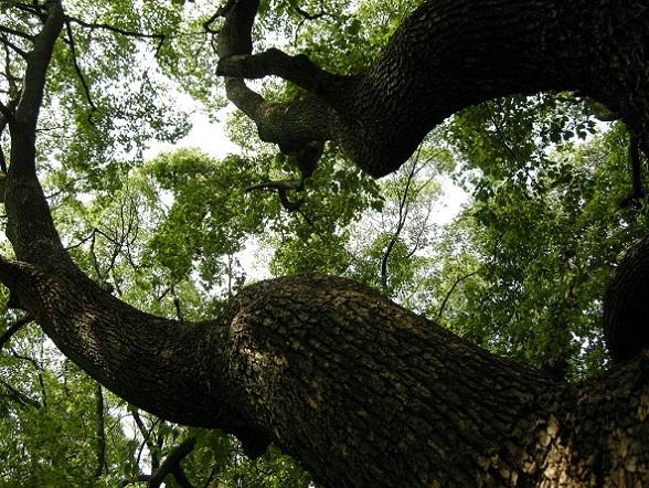 夏の木の下で