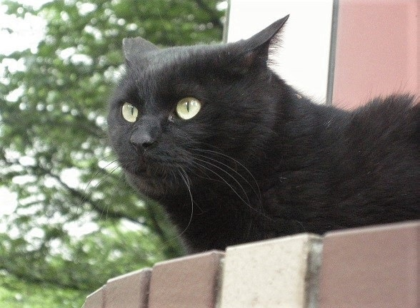最後の黒猫